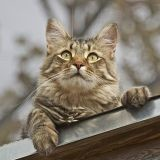 Véritable miraculé, ce chat est resté coincé 6 semaines dans une cheminée