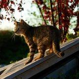 Ce chat grimpe sur le toit de sa maison, puis se rend compte d'un détail très important