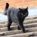 Un chat coincé sur un toit depuis 12 jours dans l'indifférence générale