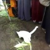 Ce chat en deuil refuse de quitter la tombe de son maître (Vidéo)