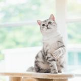 Comment apprendre des tours à son chat ?