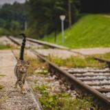 Dans ce train, les voyageurs peuvent câliner des chats ! (Vidéo)