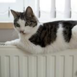 Mon chat déborde d'énergie, comment le canaliser ?
