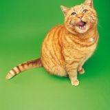 Mon chat est trop gros, que faire ?