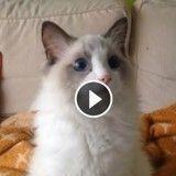 Ce chat est totalement fasciné par ce qu'il regarde à la TV (Vidéo du jour)