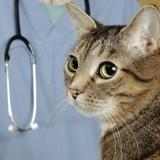 Face à une facture vétérinaire élevée, 19% des propriétaires de chats seraient prêts à euthanasier leur animal