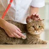 Ils emmènent leur chat faire une visite de routine, le vétérinaire n'en croit pas ses yeux
