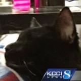 Elle dépose son chat chez le vétérinaire parce qu'il est trop collant : le diagnostic change sa vie pour toujours