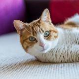 Vous ignorez peut-être que votre chat est malade ! Voici comment le savoir