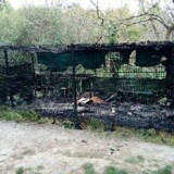 Un refuge pour chats d'Angers détruit par un incendie volontaire