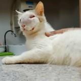 Ignoré pendant des mois, ce chat à la tête enflée s'est métamorphosé (Vidéo)