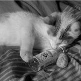 Un chat empoisonné sauvé par un incroyable remède. Vous ne devinerez jamais lequel !