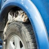 Il monte dans sa voiture, allume le moteur, et entend un bruit inquiétant