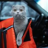 Sa voiture plonge dans une rivière, elle s'en sort saine et sauve… avec son chat !