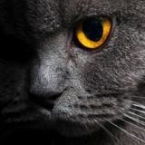 Un chat « miraculeux » capable de réaliser 3 voeux est mis en vente pour 130 000 $ !