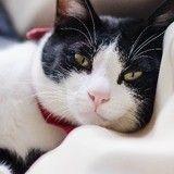 12 ans après sa disparition, un chat retrouve sa maison !