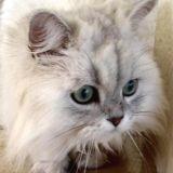 Votre chat est-il stressé ?