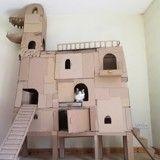 Pour faire plaisir à son chat, il lui fabrique une maison en carton en forme de dragon