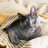 Les 4 maladies les plus fréquentes du chat en automne et comment y remédier naturellement