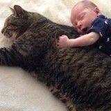 Ce chat et ce bébé sont les meilleurs amis du monde depuis toujours