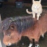 Ce chat est le boss de la ferme et compte bien le faire savoir