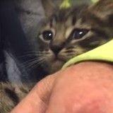 33 heures ont été nécessaires au sauvetage d'un chaton coincé dans une canalisation