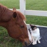 Amis depuis le premier jour, ce chat et ce cheval vont vous faire fondre ! (Vidéo du jour)