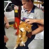 Coincé sous le capot d'une voiture, ce chat a été sauvé par un mécanicien !