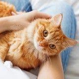 Mon chat digère mal : que faire ?