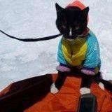 Un chat a conquis le plus haut sommet d'Europe… sur l'épaule de son maître !