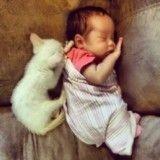 Cette fillette partage une relation toute particulière avec les chats et c'est adorable !