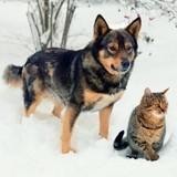 Comment bien protéger ses chats et chiens du froidhivernal
