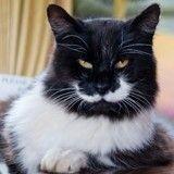 Votre chat boude sa gamelle ? Voilà pourquoi !