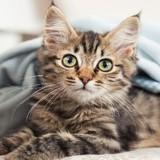 Choisir le meilleur des noms pour son chat en 2016, année du «M»
