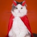 Le chat est-il un animal manipulateur ?