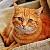 Comment administrer un médicament à votre chat ? Un vétérinaire vous répond !