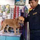 Ce chien errant est trop content d'aider la police à s'entraîner aux fouilles au corps (Vidéo)