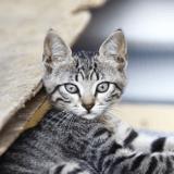 Multiples cas de typhus : des vétérinaires alertent les propriétaires de chats