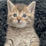 Ce petit chaton a décidé de se lier d'amitié avec le chien de sa famille d'adoption