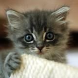 Comment bien accueillir un chaton à la maison ?