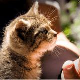 De quelle façon avez-vous adopté votre animal ? (La question Wamiz/RMC)