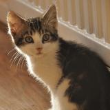 Comment préparer l'arrivée du chat et l'aider à s'habituer à son nouvel environnement