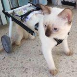 Pour aider les animaux handicapés, cet électricien fabrique des prothèses avec des objets de récup