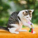 En découvrant un nouveau jouet, ce chaton de refuge s'est mis dans de sales draps ! (Vidéo)