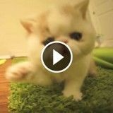 Cet adorable chaton ne sait pas comment réagir face à la caméra (Vidéo du jour)