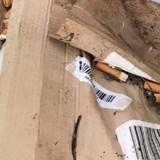 Un employé fait sa pause cigarette et il découvre l'impensable dans le cendrier