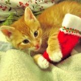 5 idées de cadeaux de Noël pour votre chat