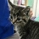 Ce minuscule chaton n'arrêtait de pleurer, une vétérinaire a une idée géniale !