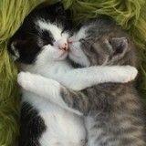 Si vous voulez sauver votre couple, regardez des images de chatons !