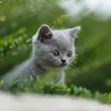 Quelqu'un abandonne depuis des semaines des chatons de race : la police a une piste qui fait scandale